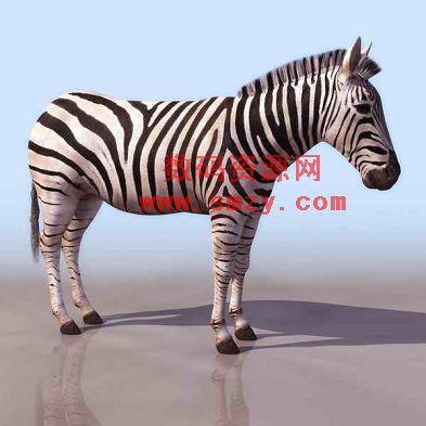 3d动物模型 斑马