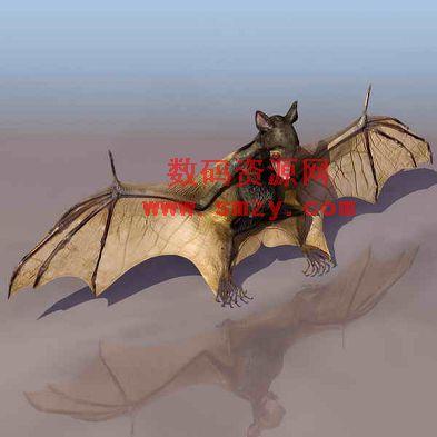 3d动物模型-蝙蝠