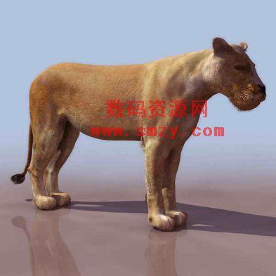 狮子模型 动物3d模型下载