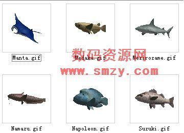 动物3d模型 鱼
