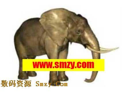 动物3d模型 大象