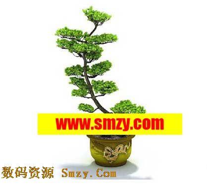 免费松树盆景3d模型