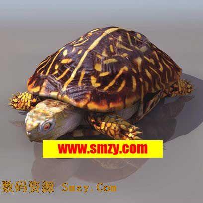 3d模型 动物模型