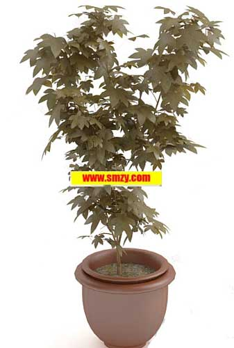 3d植物盆栽模型下载