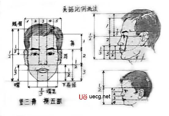 外形鼻子解剖结构图解