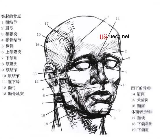 身体面部结构图
