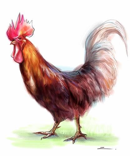 手绘教程《鸡年画鸡》(四)