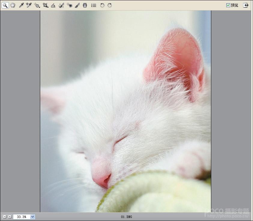 PS照片后期处理教程 快速还原小猫清晰的毛发