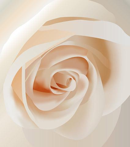 白色玫瑰花特写矢量图