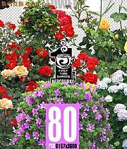 PSD格式高清晰花卉圖