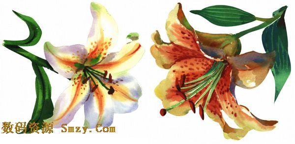 高清手绘水彩百合花素材