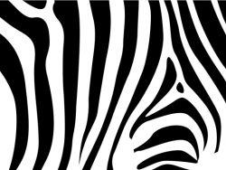 豹纹虎纹斑马纹图案矢量素材