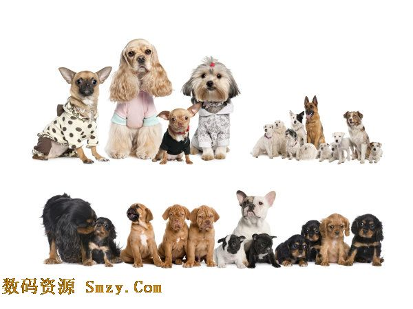 可爱狗狗高清图片下载 - 宠物小狗 - 数码资源网