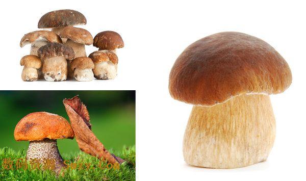 三张高清蘑菇图片素材
