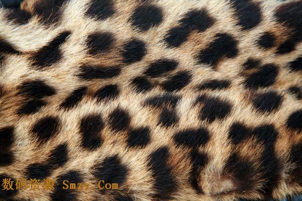 高清豹纹图片背景素材