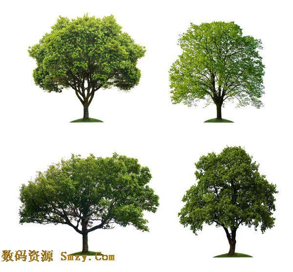 图片素材 树木/高清大树树木图片素材 的软件界面