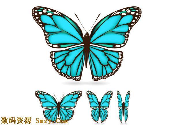 蓝色蝴蝶图片矢量素材