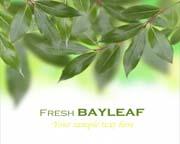 绿色大自然清新树叶背景高清图片