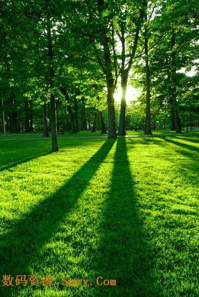 这张 绿色生机树林草地高清图片清晰的展示了人们向往的风景,温暖的