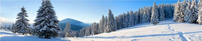 冬季雪地松树林风景高清图片