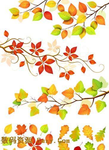 秋天的树叶图片矢量素材