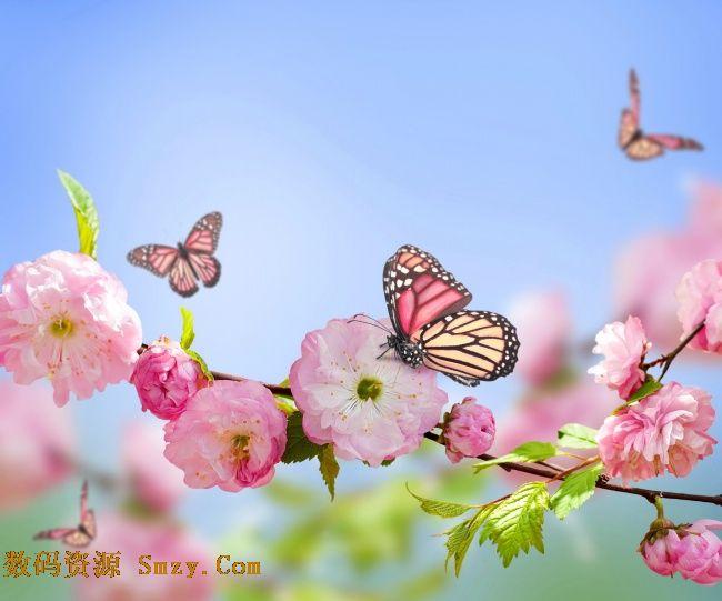 蝴蝶櫻花小清新背景高清圖片
