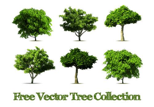 这张绿色树木茂盛时期矢量素材展示的就是集中树木的外观,树木因种类