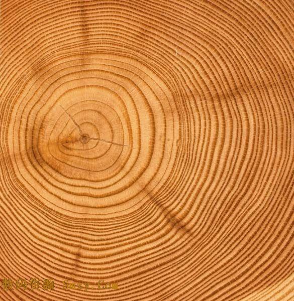 树木切面年轮纹理高清图片