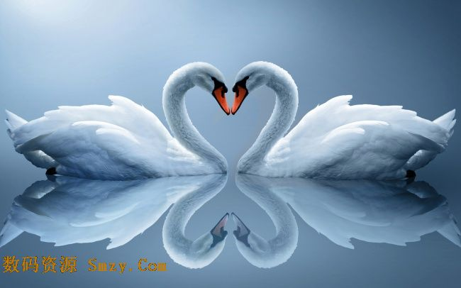 唯美天鹅爱心高清图片