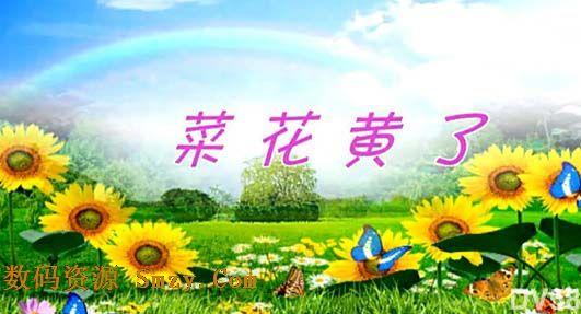 每一张照片都拥有独特的魅力,你可以将各种照片制作成视频进行留存,这里为你准备了会声会影X7写真模板,这款菜花黄了音乐照片视频模板可以完美运行在会声会影X7平台,蓝天白云彩虹的背景下,还有很多向日葵和蝴蝶搭配,之后才是照片的轮回展示,加上春暖花开的音乐背景和字幕一同设计而成,详细还请见JPG缩略图和视频小样!