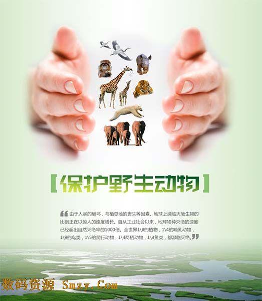 保护野生动物广告设计psd素材