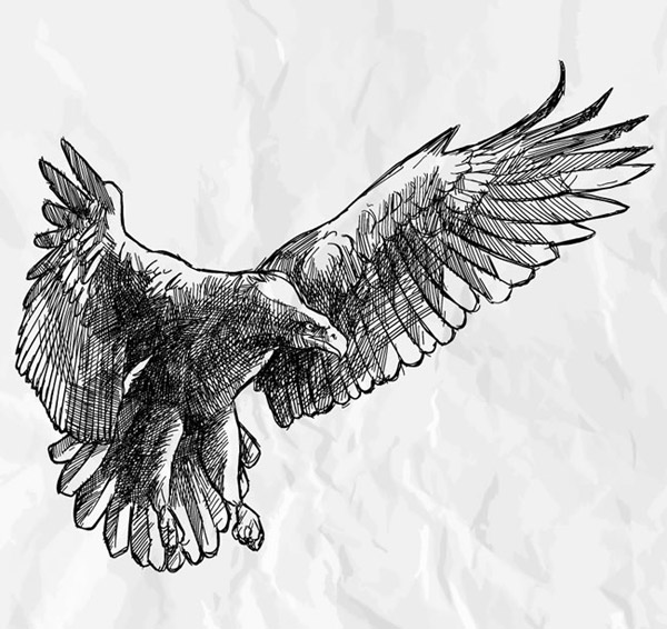 雄鹰展翅代表大展宏图,鹏程万里,很多背景中都展示的是雄鹰,奋力前进、敢于拼搏,以此迈向未来,这是人们的一种期望,手绘动物之展翅雄鹰背景矢量素材展示的就是手绘黑色线条雄鹰背景,详细还请见JPG缩略图,喜欢可以点击下载收藏!