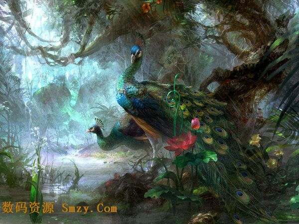 美丽孔雀森林背景高清图片