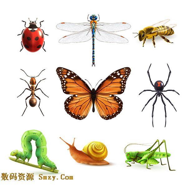 首页 资源下载 平面素材 图标素材 动物植物 > 卡通多种昆虫图标素材