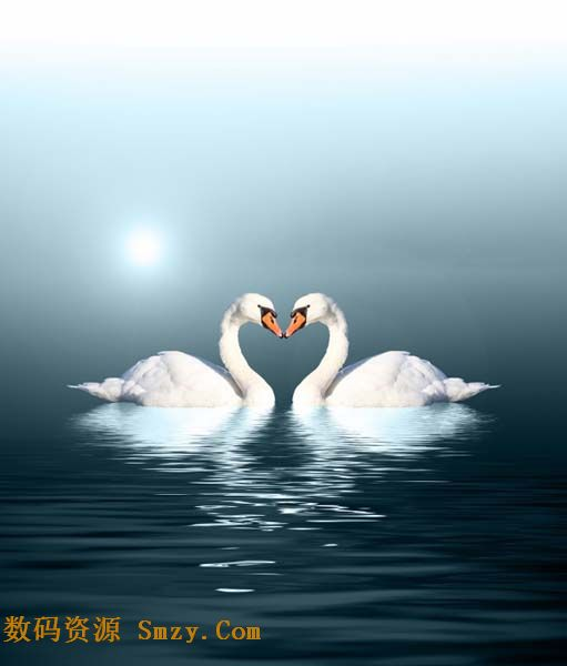 首页 资源下载 平面素材 精美图片 动物 > 唯美天鹅爱情心形背景倒影