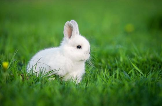 资源下载 平面素材 精美图片 动物 → 在绿色草丛中的小眼睛兔子高清