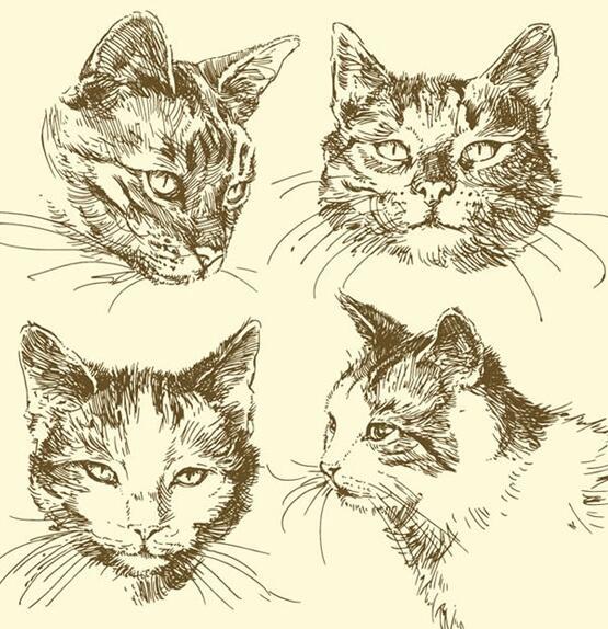 手绘动物猫咪头像矢量素材