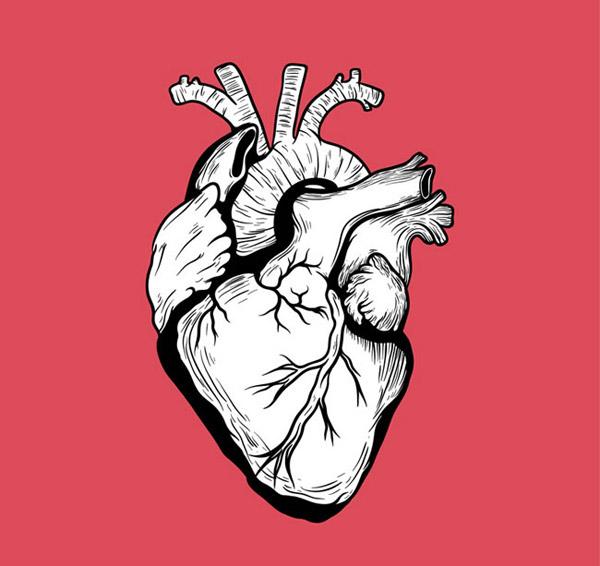 手绘心脏图案背景设计矢量素材就是心房的面貌,纹路血管清晰可见