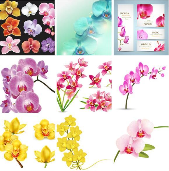不同,盛开时,花瓣展向四方,清香沁人心脾,也是设计中可以看到的图片