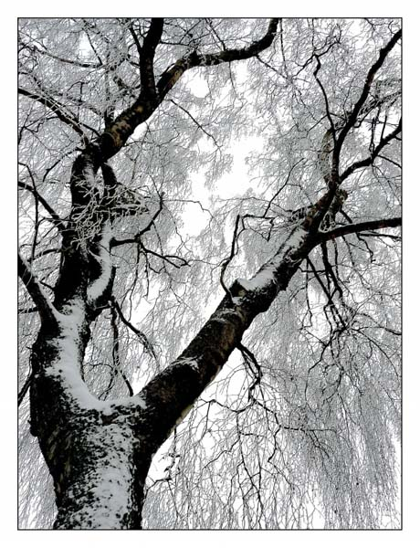 冬天结冰树木风景高清图片