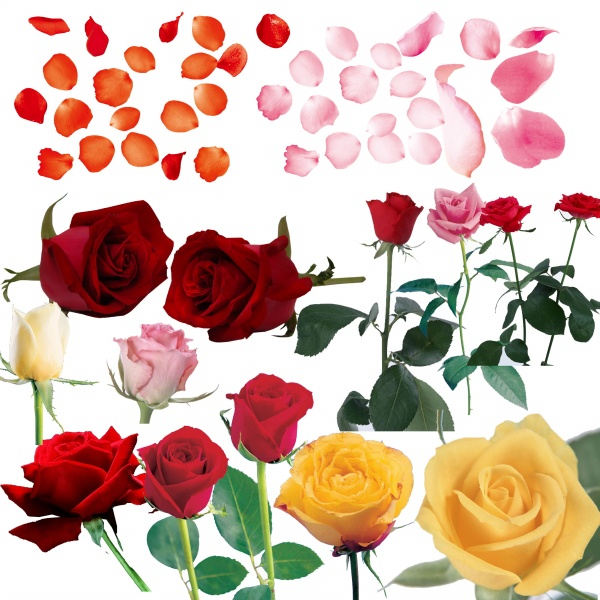 金婚花卉设计手绘图