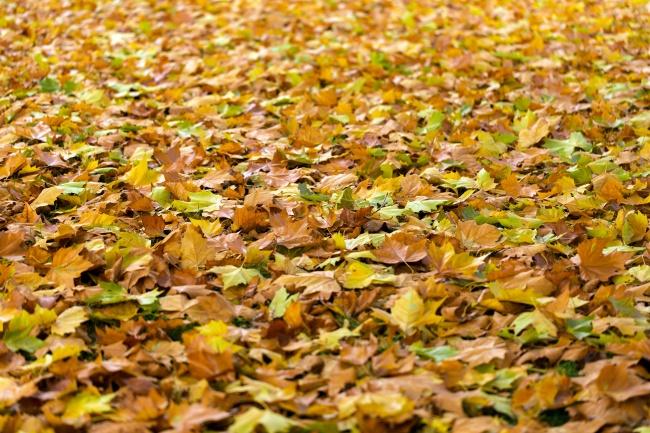 金色秋天满地秋叶背景高清图片