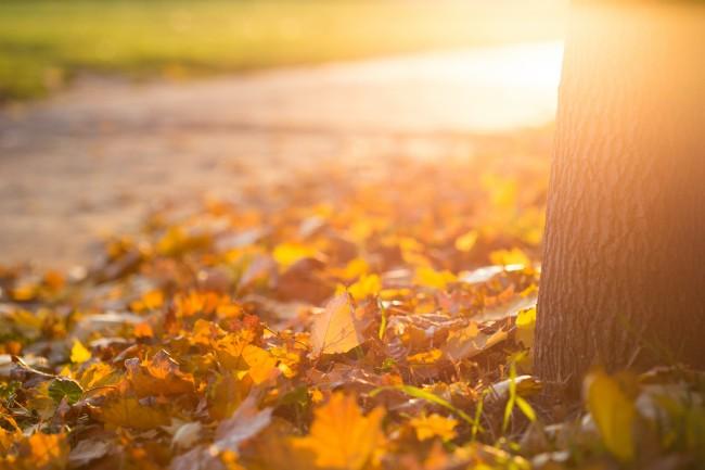 秋天金色树下落叶背景高清图片图片