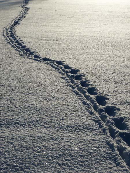 冬日雪地脚印背景高清图片