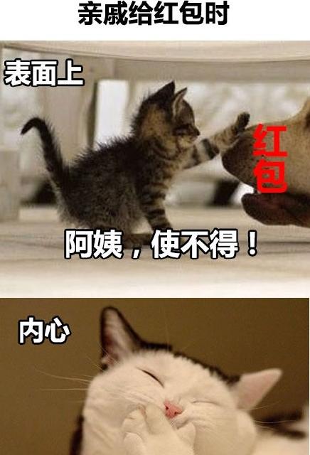 萌猫故作镇定表情包(萌猫表情包) 完整版图片