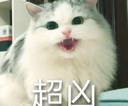 馒头猫超凶表情包下载(qq表情包)