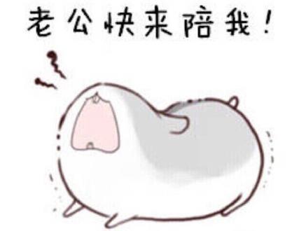 仓鼠表情包(真的是太可爱) 原图无水印版