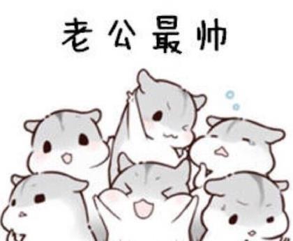 仓鼠表情包下载(真的是太可爱) 原图无水印版 - 超棒图片