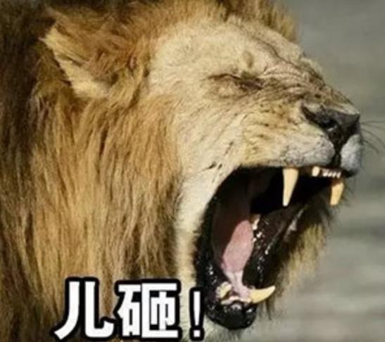 壁纸 动物 狮子 桌面 547_486