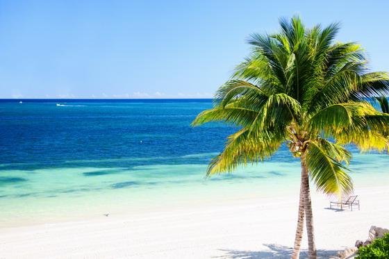 首页 资源下载 平面素材 精美图片 植物 > 沙滩椰树与望不到边的大海